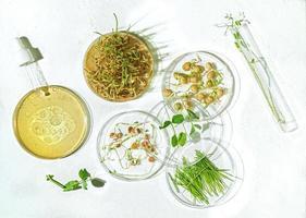 cosmetische huidverzorgingsachtergrond van petrischalen en cosmetische buizen met kruidengeneeskunde met gekiemde zaden van erwten, linzen en tarwekorrels foto