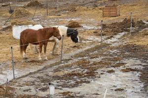 paarden op een boerderij in een buitenverblijf in de lente