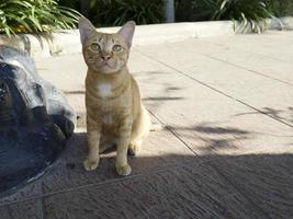 een oranje kat die buiten zit foto