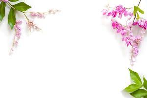 frame van roze bloemen met groene bladeren geïsoleerd op een witte achtergrond foto