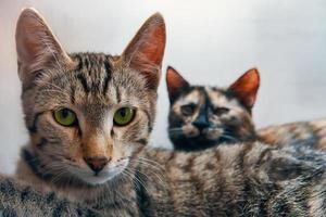 twee huiskatten camera kijken foto