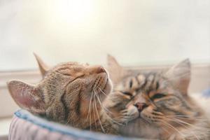 twee katten die in een mand slapen foto