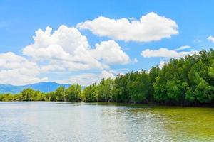 mooi mangroveboslandschap in Thailand foto