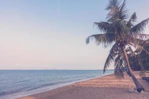 kokospalm op het strand foto