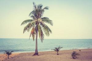 kokospalm op het strand