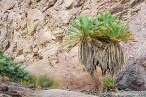 groene palmboom in de bergen