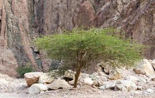 groene boom en rotsen