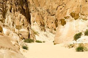 struiken groeien in rotsen en zand foto