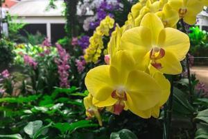 gele orchideebloem in tuin foto