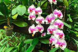 witte orchideebloem in tuin foto
