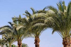 palmbomen gedurende de dag foto