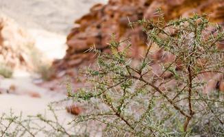 groene struik in de woestijn foto