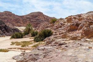 rotsachtige bergen en vegetatie foto