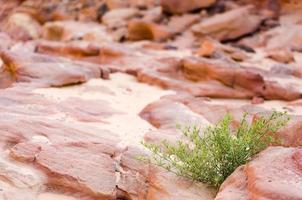 groene struik en rotsen