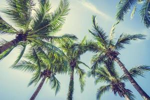 kokospalm op blauwe hemel