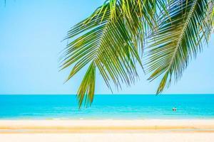 prachtige palmboom op het strand