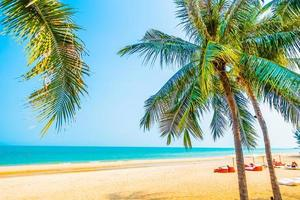 prachtige palmboom op het strand foto