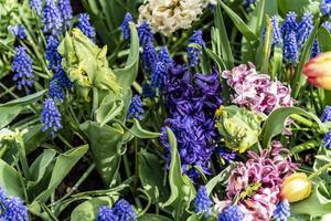 geassorteerde lentebloemen foto