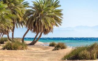 palmbomen aan zee