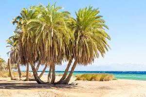 groep palmbomen