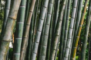 close-up van bamboe schors