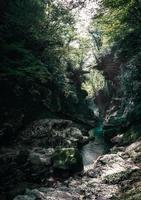 stroom en rotsen in een bos