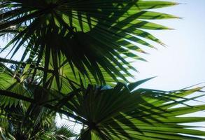 palmbladeren tegen blauwe hemel foto
