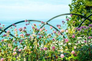 heldere bloemen met de oceaan op de achtergrond