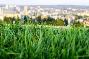 close-up van gras en een stad op de achtergrond
