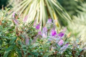paarse bloemen in een tuin gedurende de dag