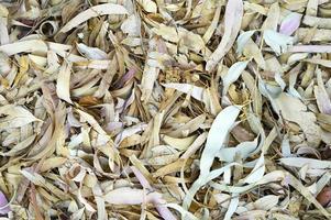 gestructureerde achtergrond van droge verdorde gevallen herfstbladeren van eucalyptusbomen foto