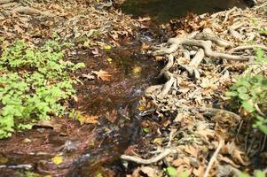 een beek die door de kale wortels van bomen in een rotsachtige klif en gevallen herfstbladeren stroomt foto