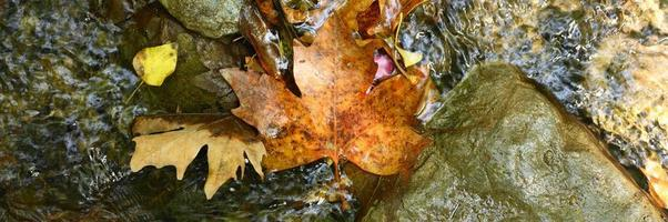 stapel natte gevallen herfst esdoorn bladeren in het water en rotsen foto