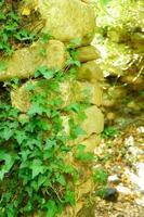 klimop op een oude stenen muur in zonnige zomerdag foto