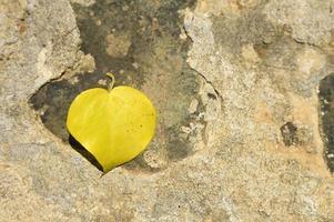 geel gevallen herfstblad in de vorm van een hart op een steen foto