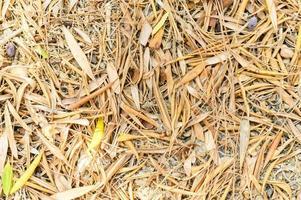 gestructureerde achtergrond van droge verdorde gevallen herfstbladeren van olijfbomen foto