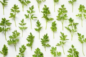 verse biologische peterselie bladeren gerangschikt in een rij op een witte achtergrond foto