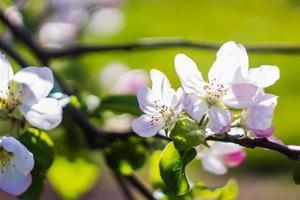 mooie bloem in de lente, delicate bloemen macro foto
