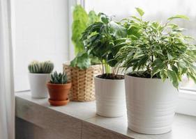groene kamerplanten op de vensterbank van een huis foto