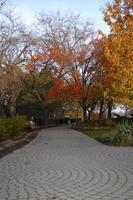 herfstkleuren in een park foto