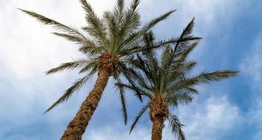 palmbomen tegen de hemel foto