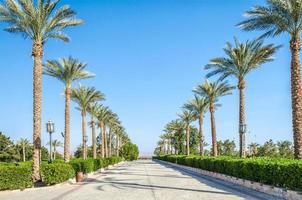 palmbomen langs de straat foto