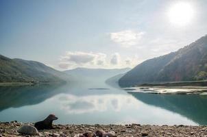 hond die naast een meer in Georgië legt foto