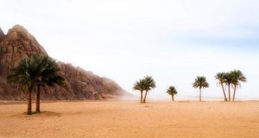 palmbomen en rotsachtige bergen in de woestijn foto