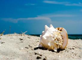 close-up van een schelp op een strand foto