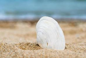 witte schelp in zand foto