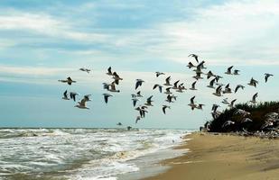 zwerm meeuwen die over de zee vliegen foto