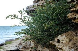 groene struik groeit op stenen tegen de zee foto