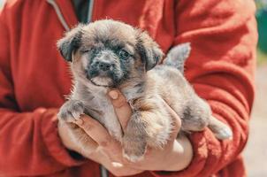 kleine schuilplaats pup