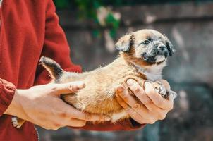 persoon met een kleine puppy foto